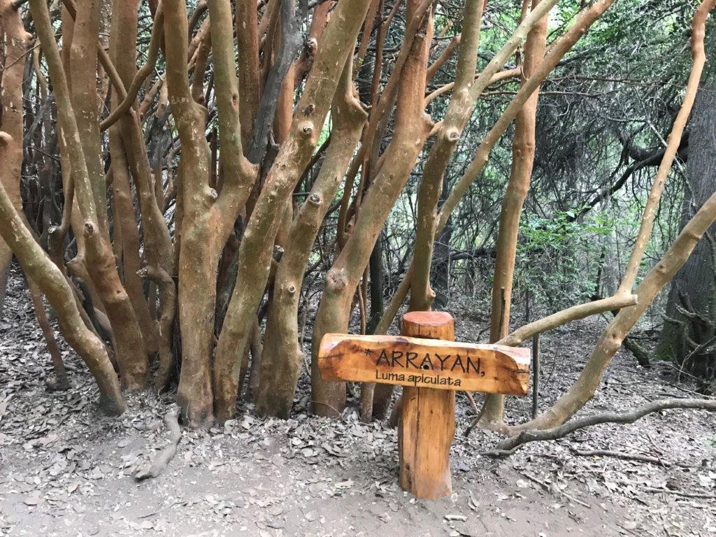 Unique trees in the area