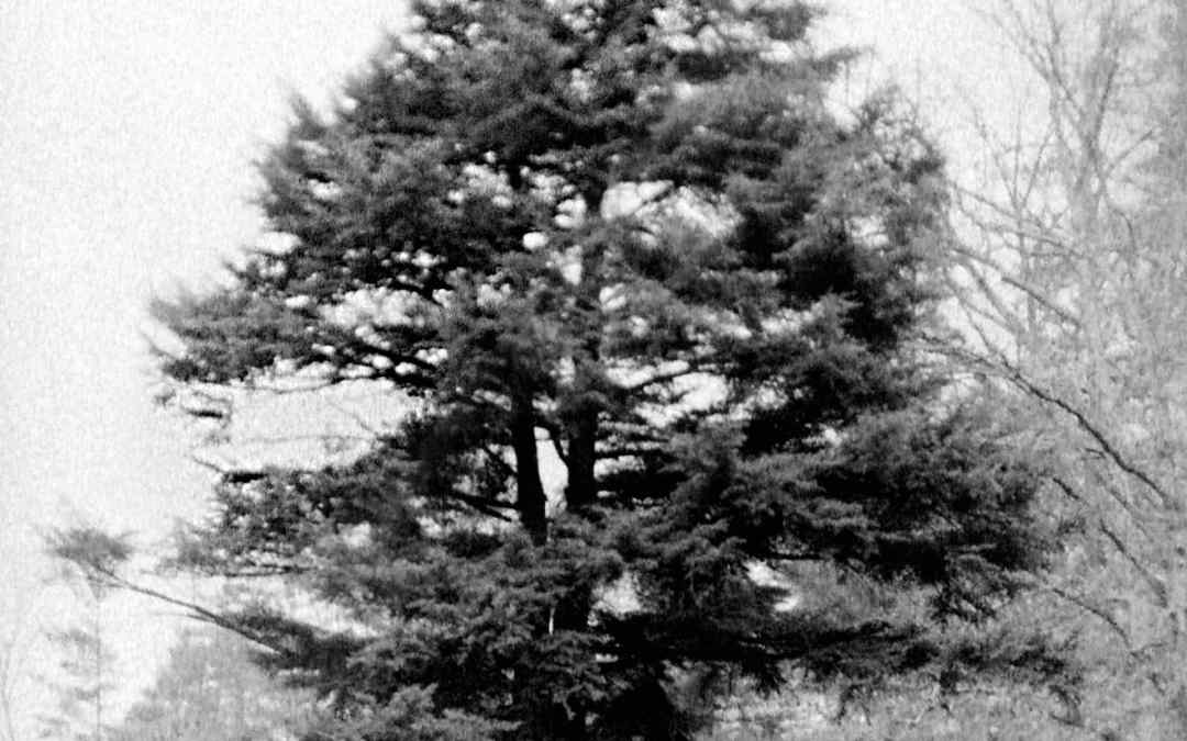 The Spruce Pine at the Forks of the Road