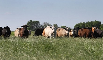 Ranchers: Be on high alert during pandemic