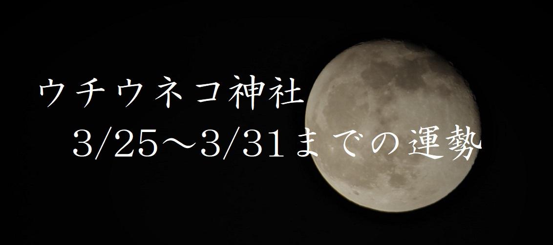 【ウチウネコ神社】3/25~3/31までの運勢