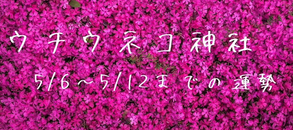 【ウチウネコ神社】5/6~5/12までの運勢