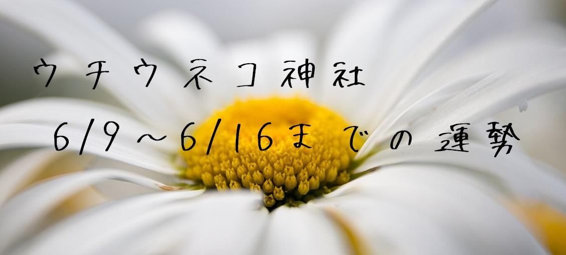 【ウチウネコ神社】6/9~6/16までの運勢