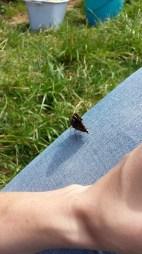 Nach der Ernte haben wir uns noch ins Gras gesetzt, da ist ein Schmetterling auf mir gelandet :)