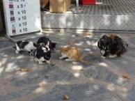 Katzenfamilie in Ag. Nikolaos.