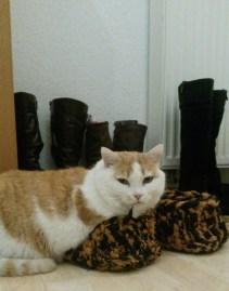 Katze Trixi in Papas Hausschuh.