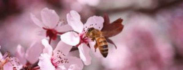 spring-blossoms2