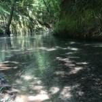 大出水から流れる川