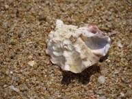 浜辺にて貝を見つけたよ
