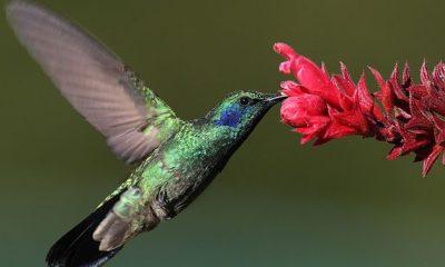 Simbología del colibrí