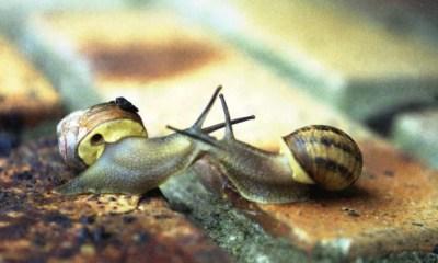 Simbología del caracol