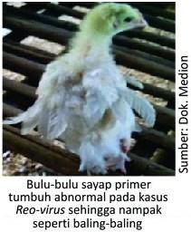Ayam kecil dan kerdil