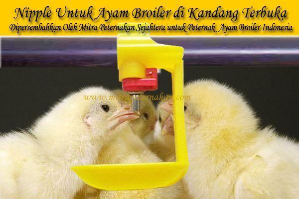 Nipple Ayam Broiler