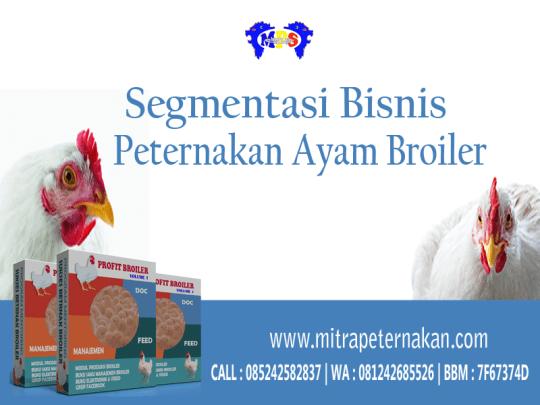 segmentasi-bisnis-ayam-broiler-800x600