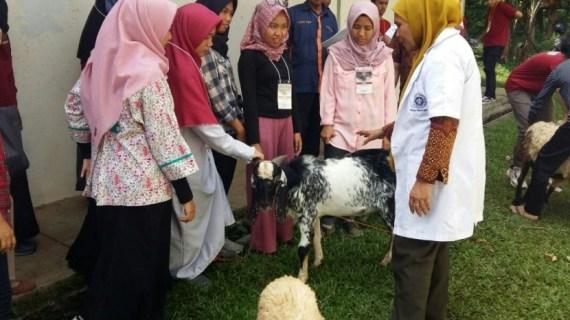Mahasiswa Fakultas Peternakan Harus Punya Ternak