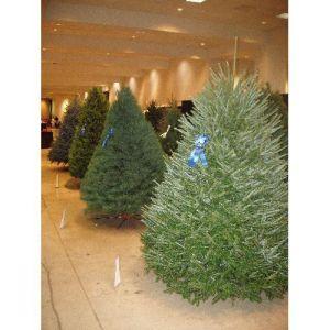 Christmas Tree Display System