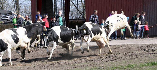 Danmarks økologiske areal er øget med en størrelse svarende til Langeland