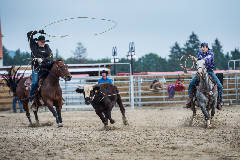 Fotogalerie Team Roping Final 2015