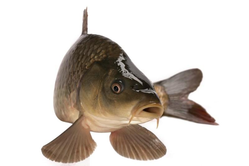 Podzimní výlov ryb
