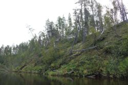 abstürzende Bäume