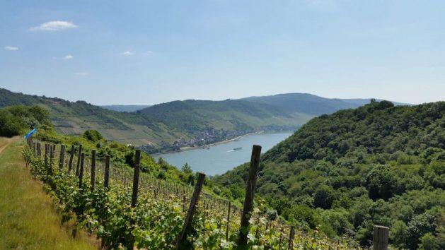 Stadt-Land-Fluss am Mittelrhein: Blick von Medenscheid in den Rheingau.