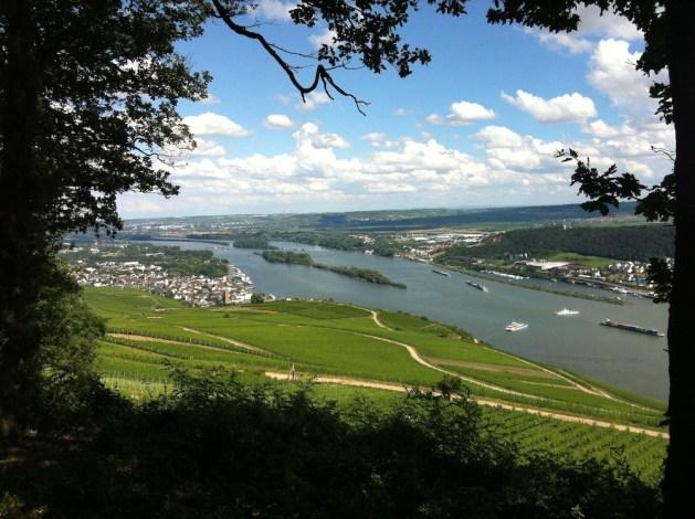 Der Niederwald bietet beste Einblicke ins Rheintal. Foto: Rüdesheim Tourismus AG / Christian Schüller