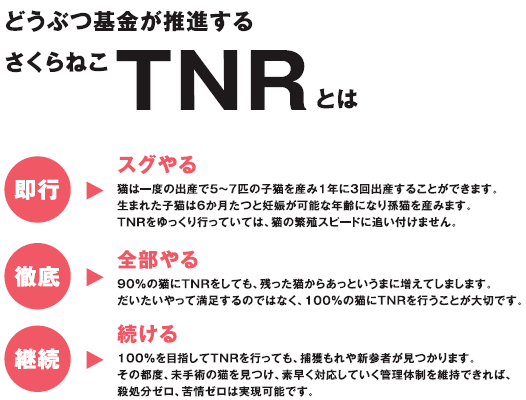 TNR説明.png