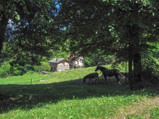 Wandern in Colico