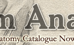 dream-anatomy-catalogue-logo