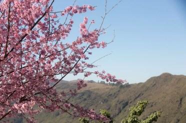 Quadro Cultural: Hanami e a Cultura Japonesa – Bloco 05