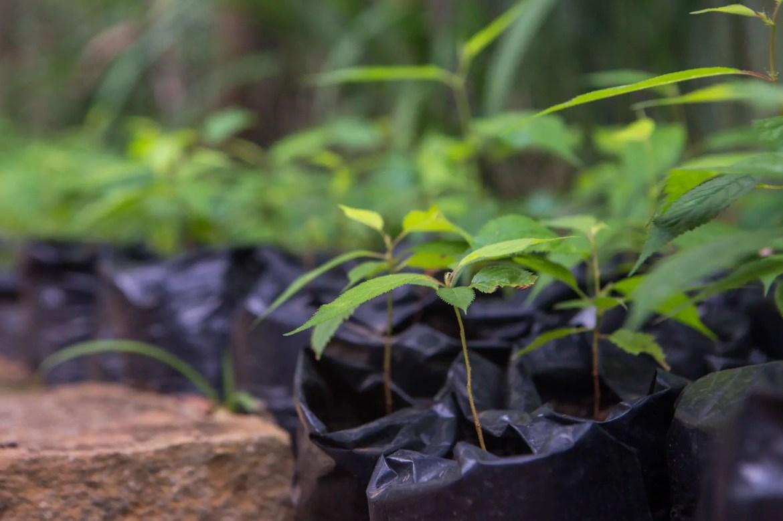 Dia da Árvore: moradores se organizam para distribuir mudas