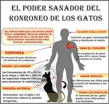 ronroneo_gatos