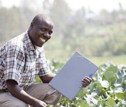 Investissement Participatif Agricole au Togo _JP37_ JP Agro