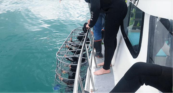 Mergulho com tubarões na África no Sul (2)