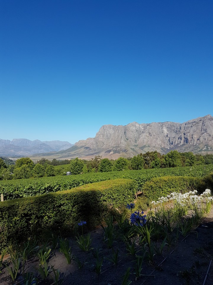 Vinícolas na África do Sul Stellenbosch e Franschhoek Tokara