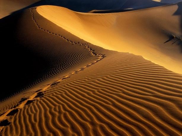 desertul namib php