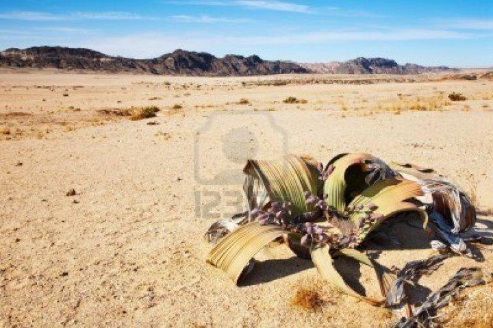 plantele desertului