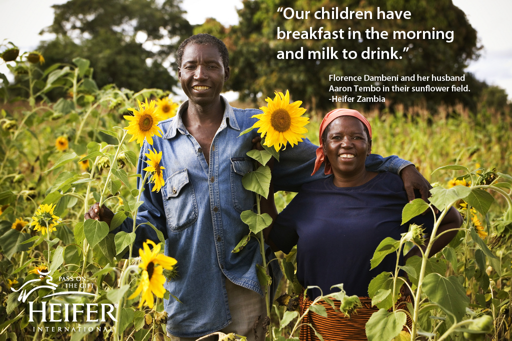 "Couple in field of sunflowers in Zambia - ""Our children have breakfast in the morning and milk to drink."""