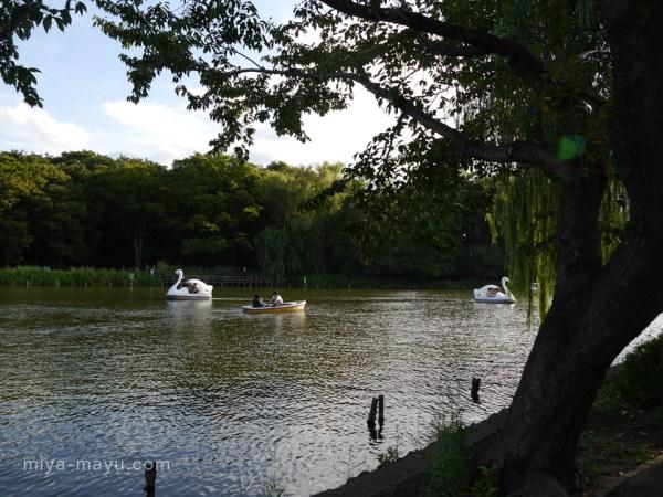 ボートと石神井池 2014.8.31 東京都練馬区石神井公園