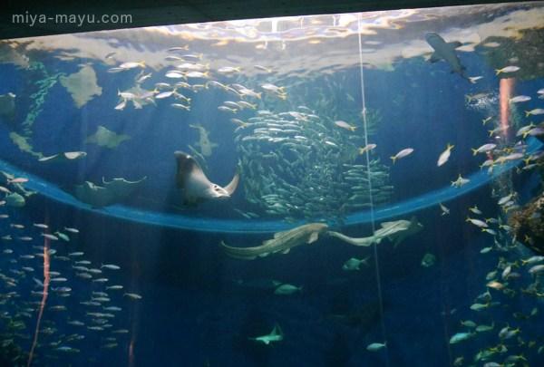 「無限の海」水槽 2014.10.11 千葉県鴨川市・鴨川シーワールド