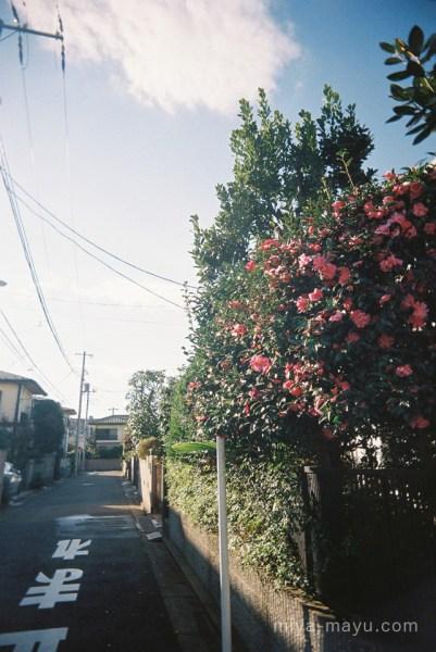141115photowalk19