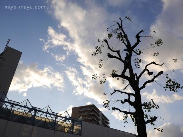 イチョウのある風景 2014.12.05 東京都練馬区