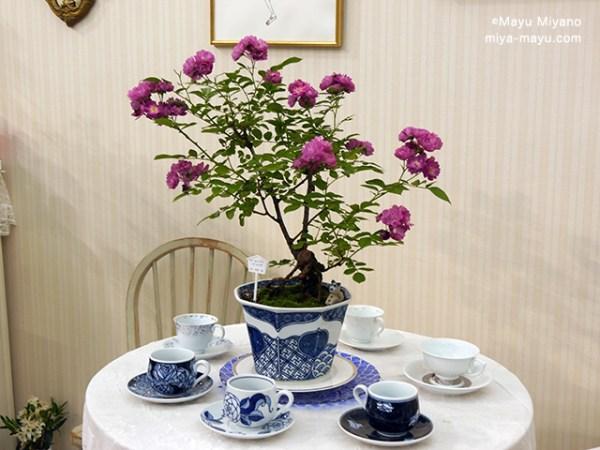 バラ模様の鉢、コーヒーカップとバラ盆栽のコラボ