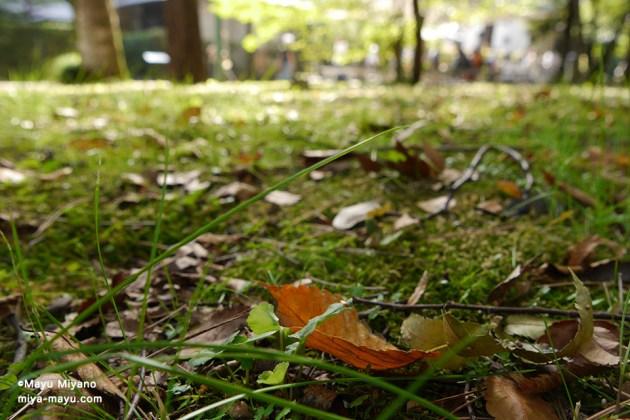 秋の林 2015.10.4 東京都小金井市・江戸東京たてもの園