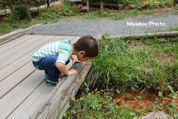 あけぼの子どもの森公園,飯能市