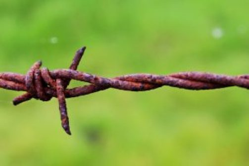 barbed-wire-721216_1920
