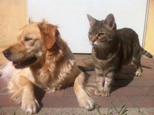 犬,猫,健康診断,若齢,宮川のほとり動物病院,