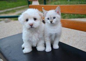 健康診断,犬,猫,
