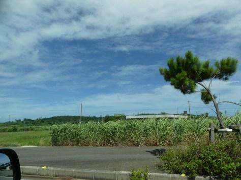 宮古島の典型的なさとうきび畑の風景の先にある航空自衛隊宮古島分屯基地