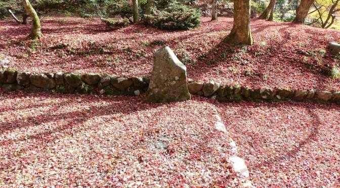 鶏足寺の紅葉を見てきた(前編) ~きれいな紅葉の絨毯~