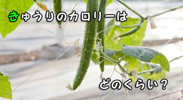 きゅうりのカロリーは一本でいくら?漬物やぬか漬けでは?ダイエットに適した野菜!?